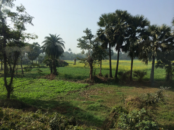 on the train to Bolpur, palm trees